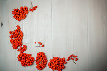 Red Colorful Rowanberry On The...