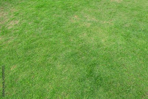 Foto auf Gartenposter Olivgrun Green grass texture for background. Green lawn pattern and texture background.