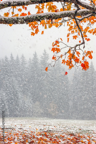 fototapeta na ścianę First snow in the forest in the mountains