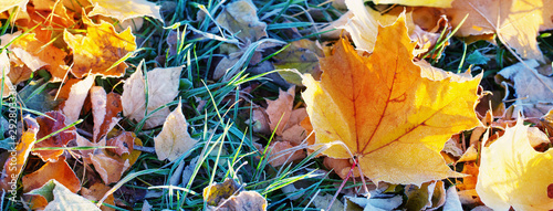 Obraz na plátně autumn background with leaves in frost