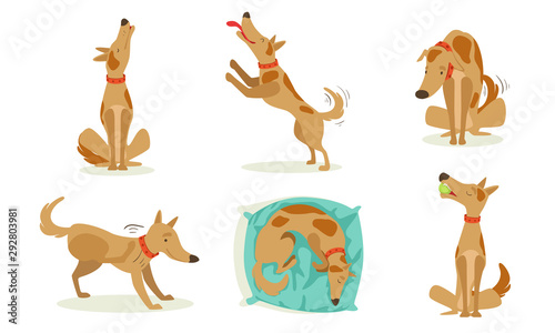 Collection of Funny Brown Dog in Different Situations Set, Cute Animal Character Wallpaper Mural