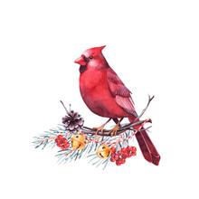 Red Cardinal Bird Sitting On A...