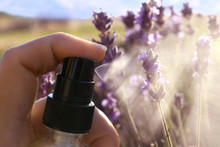 Woman Spraying Facial Toner With Lavender Essential Oil Out Of Bottle In Blooming Field, Closeup