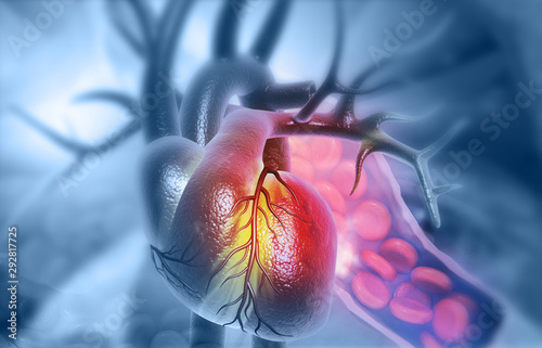 Anatomy of Human Heart with red bloodcells. 3d illustration Canvas Print