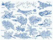 Herbs, Berries Garden. Vegan F...