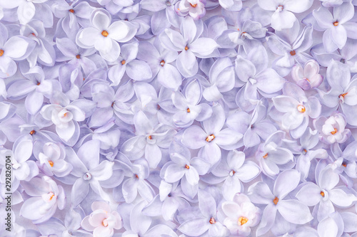 Stampa su Tela Realistic lilac flower bed backdrop