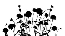 Silhouette Of Flowers. Vector Illustration