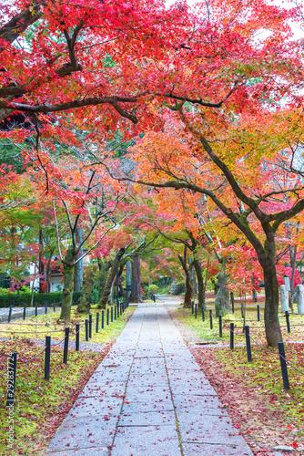 idyllic landscape of Kyoto, Japan in autumn season