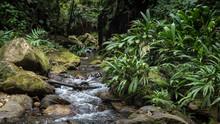 Un Cours D'eau Dans La Jungle