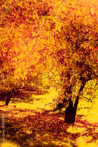 Poster de jardin Brique Beautiful autumn landscape background, vintage nature scene in fall season