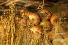 Hanging Onion Braids For Storage On A Farm.