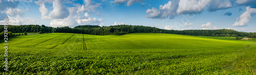 Leinwand Poster fresh green Soybean field hills, waves with beautiful sky