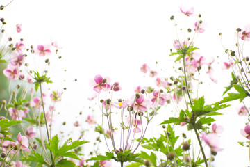Obraz na płótnie Canvas background with flowers