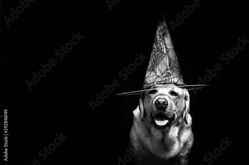 Fototapeta Perro con sombrero de bruja