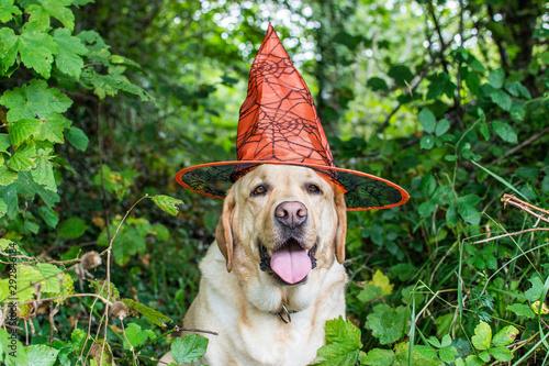Photo Retrato de un perro Labrador con gorro de Bruja