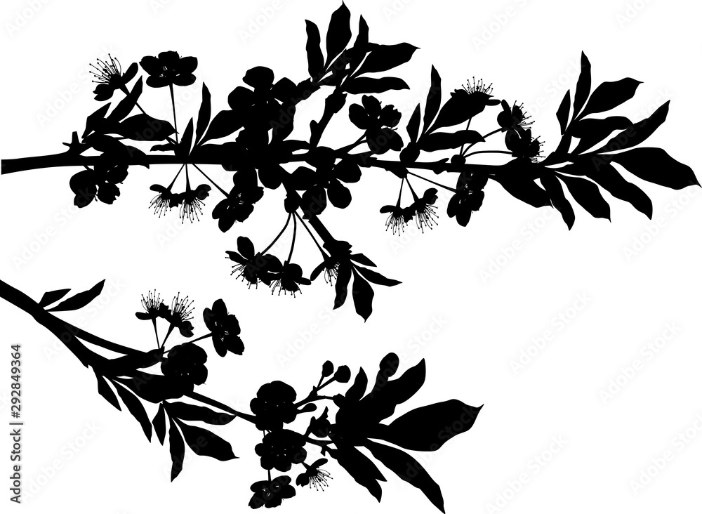 Fototapety, obrazy: silhouette of blossom sakura two branches