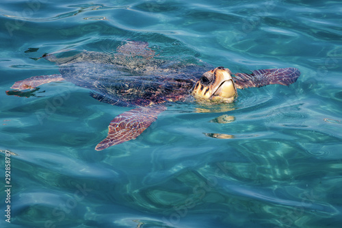 Caretta Caretta Turtle from Zakynthos, Greece, near  Laganas beach, emerges to t Wallpaper Mural