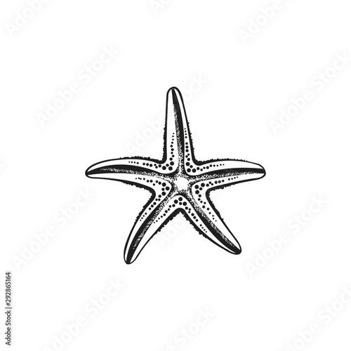 Photo Starfish vector design
