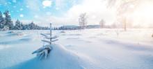Winter Wonderland - Winter Lan...