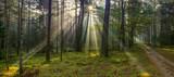 jesienne mgły w lesie na Warmii