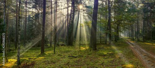 Obraz na plátně jesienne mgły w lesie na Warmii