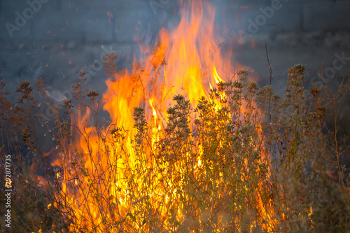 Keuken foto achterwand Vuur Dry grass burns in a field with smoke and fire.