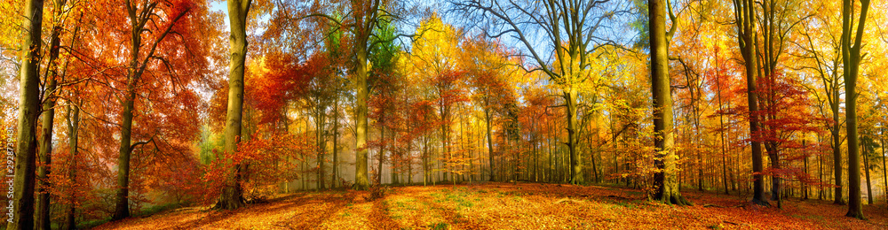 Fototapeta Colorful forest panorama in autumn
