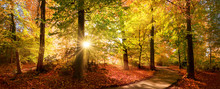Sunlit Path In A Park Before S...