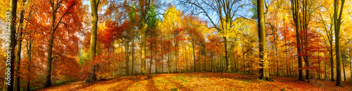 Obraz Colorful forest panorama in autumn - fototapety do salonu