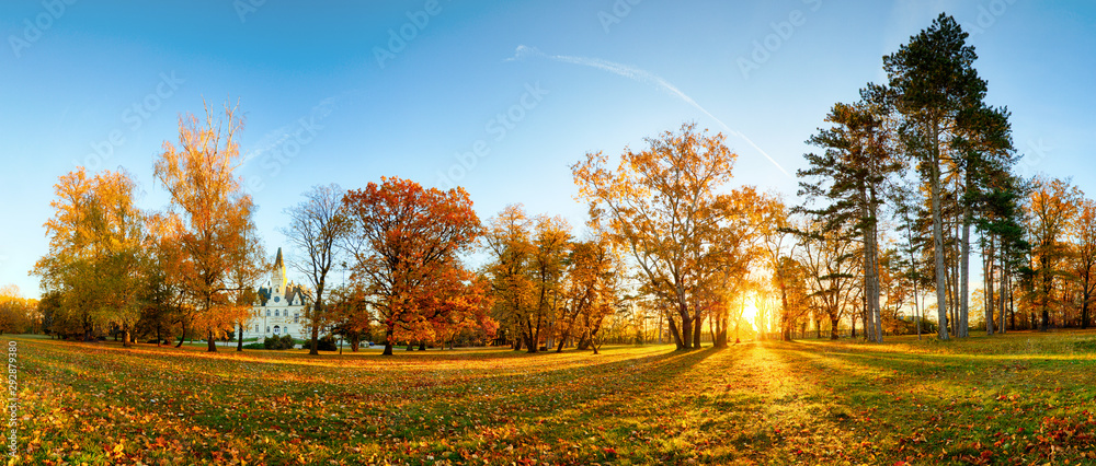 Fototapety, obrazy: Panorama of autumn tree in forest park at sunset