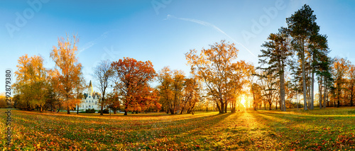 Photo  Panorama of autumn tree in forest park at sunset