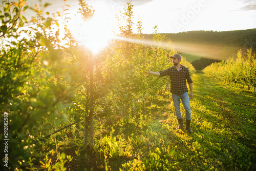Fotografía A mature farmer walking outdoors in orchard at sunset