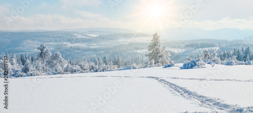 Fototapeta  Stunning panorama of snowy landscape in winter in Black Forest - winter wonderland obraz
