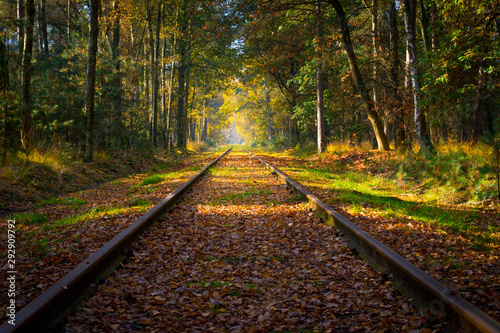 Empty railroad track through the forest in autumn (fall) on a sunny day, vanishing point