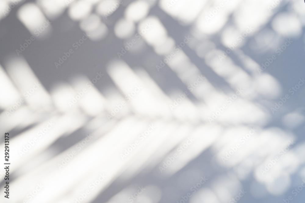 Fototapeta blurred shadow of a palm leaf on a white background
