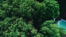 Top View Of The Trees Under Which The Father Leads The Bride To The Altar. The Quadcopter Is Shooting In Motion.