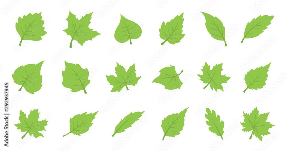 Fototapeta Green leaf set. Eco design
