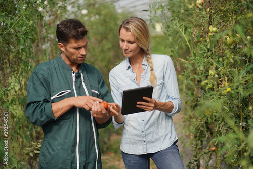 Fototapeta Farmer with agronomist in greenhouse using digital tablet obraz