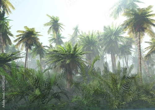 tropical-jungle-in-the-fog-palms-in-the-morning