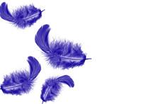 Beautiful Soft A Purple Feathe...