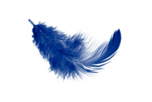 Single Blue Feather Isolated O...