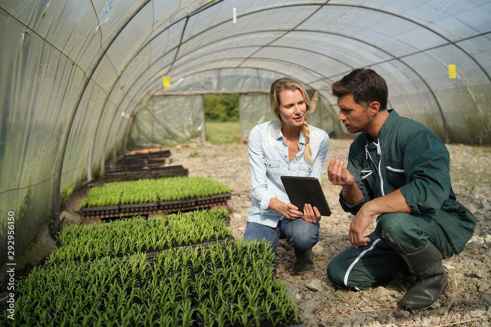 Obraz Agricultural engineer with farmer checking seedlings in greehouse fototapeta, plakat