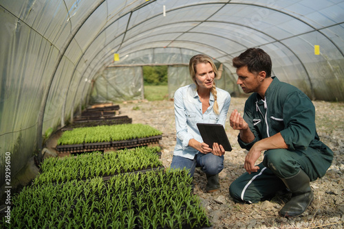 Fototapeta Agricultural engineer with farmer checking seedlings in greehouse obraz