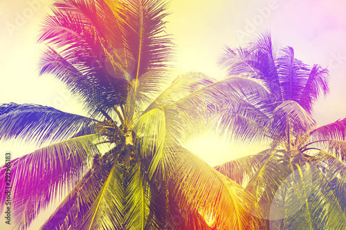 Coconut palm tree close up in tropics.Beautiful nature bakground. Vacation and travel concept.Filtered effect
