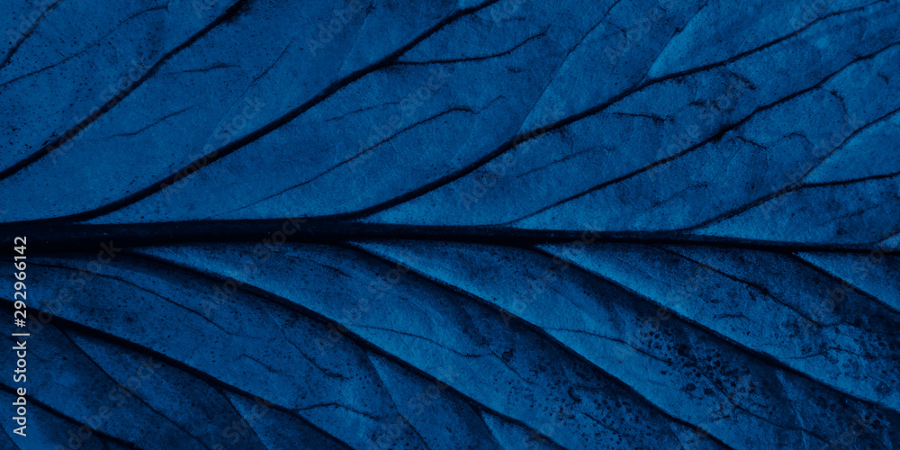 Fototapety, obrazy: Bright blue top view with veins minimalistic background. Floral backdrop concept. Flower petals close up. Floristry hobby. Web banner, greeting card idea