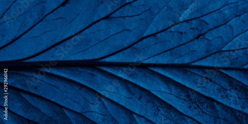 Poster de jardin Bleu nuit Bright blue top view with veins minimalistic background. Floral backdrop concept. Flower petals close up. Floristry hobby. Web banner, greeting card idea
