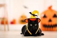 Black Cat In Halloween Hat Lyi...