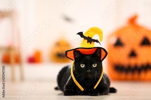 Fotomural  Black cat in halloween hat lying on the floor
