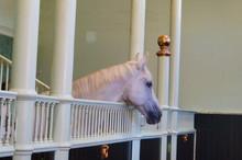 Royal Horse London