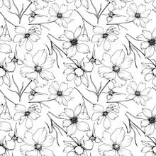 Vector Cosmos Floral Botanical...